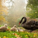 Family HD Wallpapers