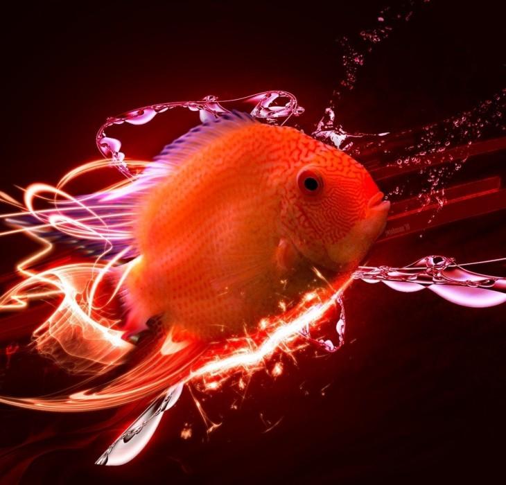 Fish 3d Wallpaper