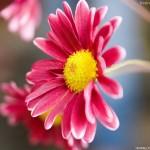 Flower Wallpaper for Desktop