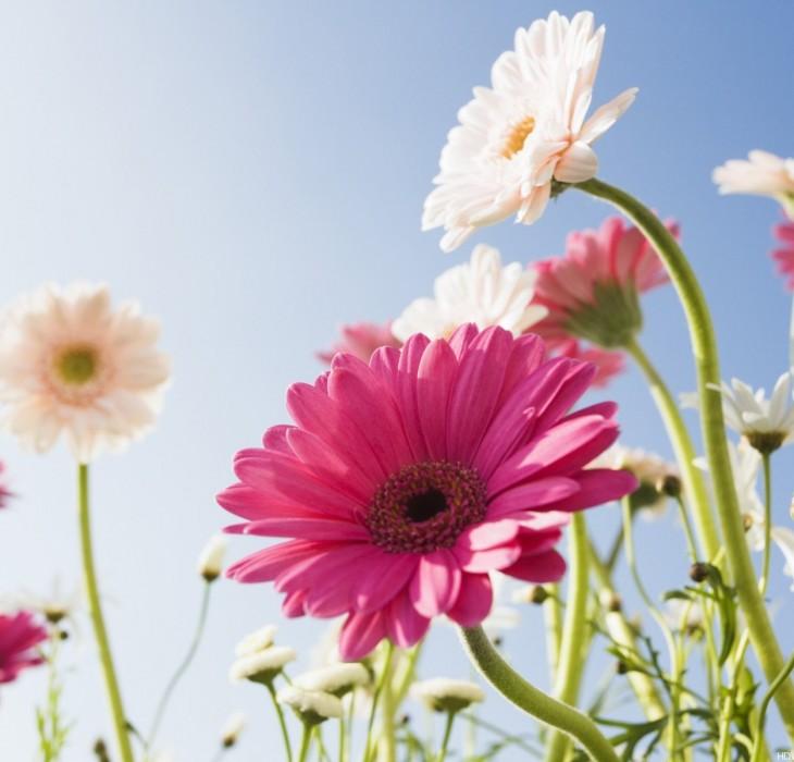 Flower Wallpaper Free Download