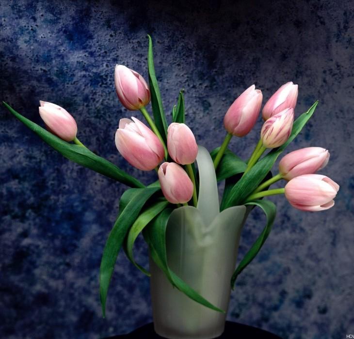 Flowers Petal