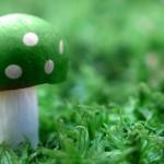 Green Mushroom Wallpaper