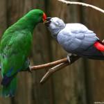Love Parrots Wallpaper
