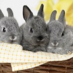 Rabbit Desktop Wallpaper