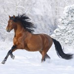 Racing Horse Wallpaper