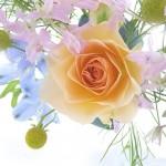 Rose Flower Wallpaper
