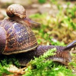 Snail Desktop Wallpaper