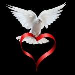 White Dove Wallpaper Download