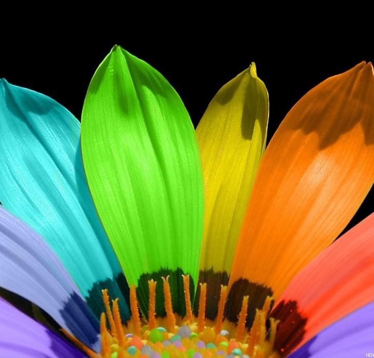 Colourful Flower Wallpaper