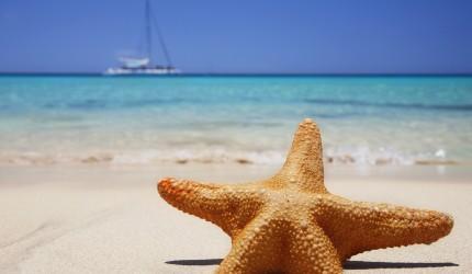 Starfish beach wallpaper