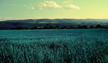 Field Scenery Wallpaper