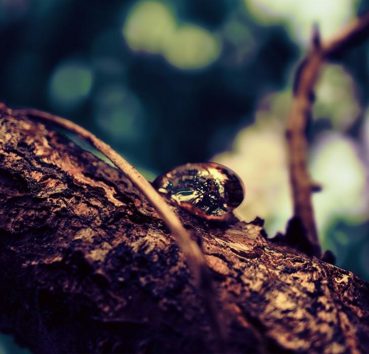 Dewdrop Wonder