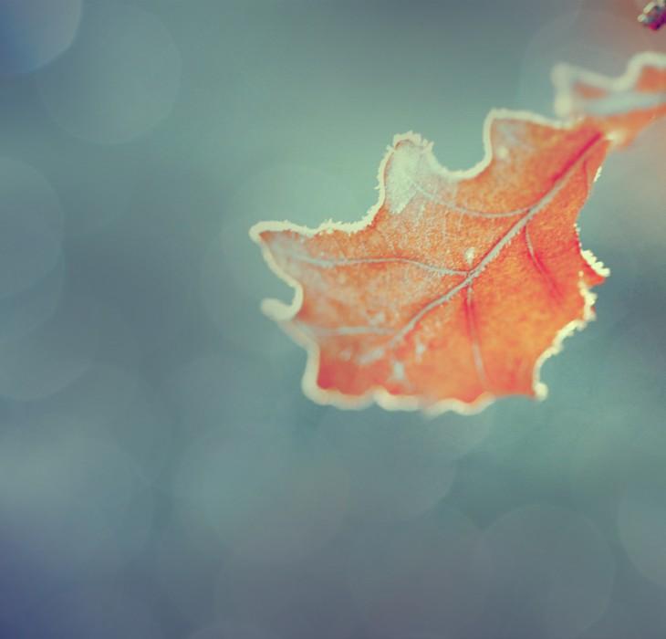 Frosty Autum Leaf Nature Wallaper