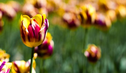 Yellow and purple flowers wallpaper