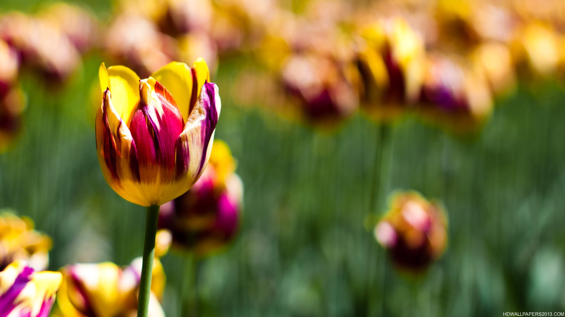 Yellow and purple flowers wallpaper | High Definition ...