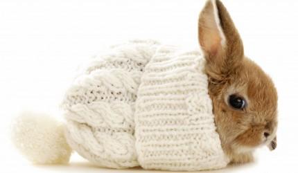 Cute Adorable Little Rabbit