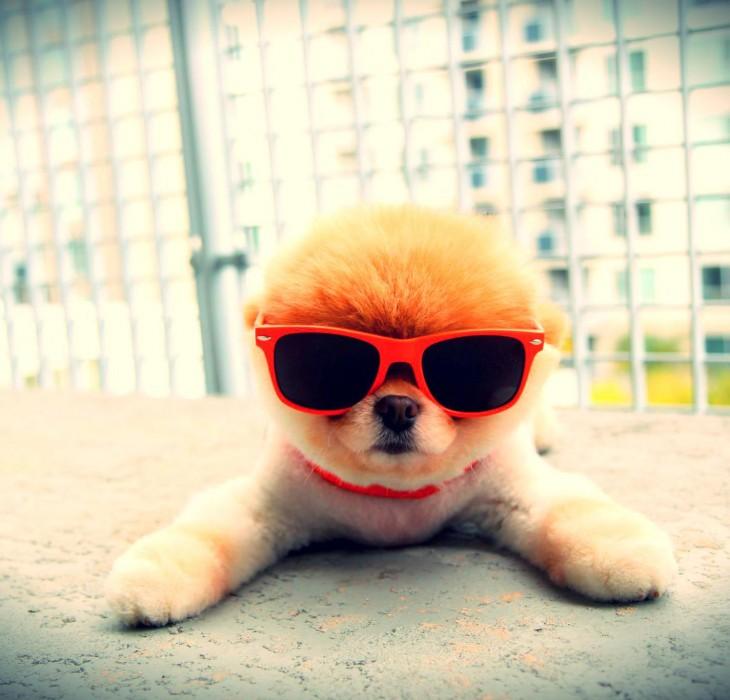Super Cool Puppy