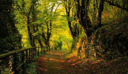 A Stroll through the Wilderness