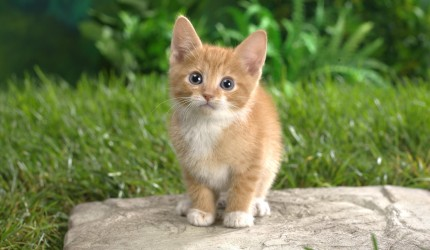 Adorable Little Tabby Cat