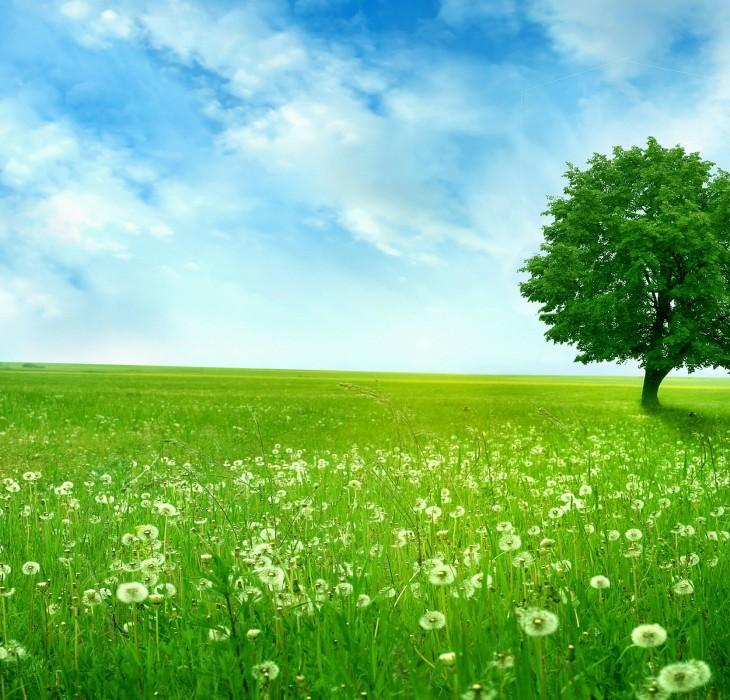 Beautiful Tree in the Field