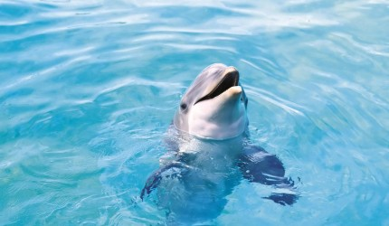 Cute and Adorable Dolphin