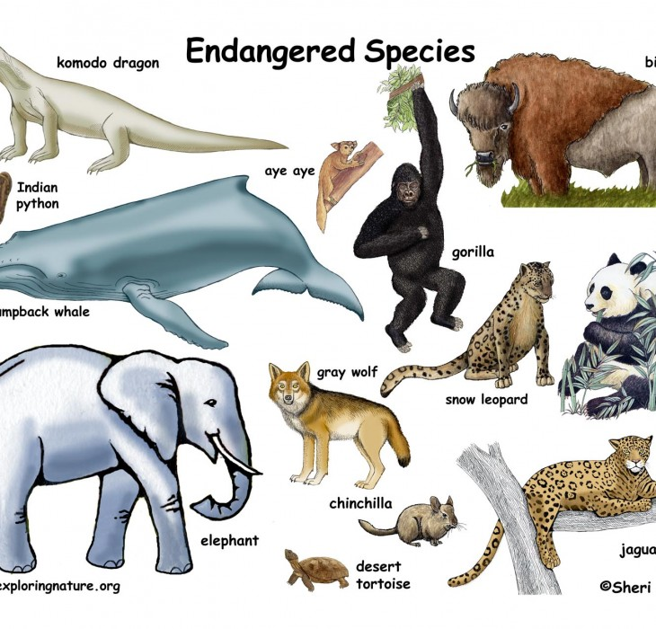 Endangered Species Wallpaper