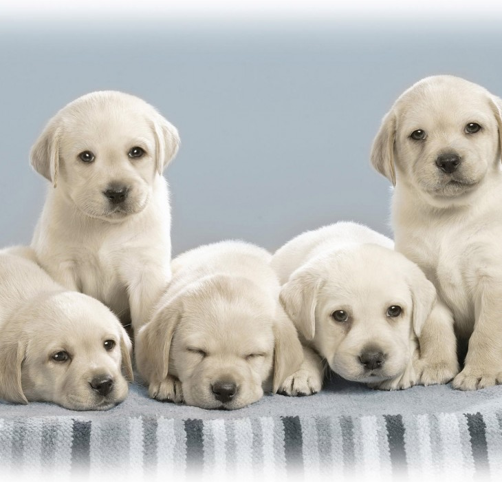Five Adorable Puppies