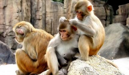 Monkeys being Monkeys