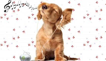 Music Listening Dog