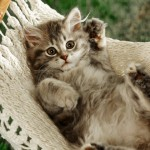 Relaxing Cat on a Hammock